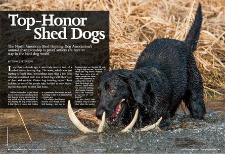 Top-Honor Shed Dogs Article